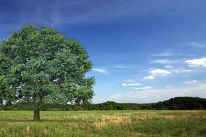 site-background-tree